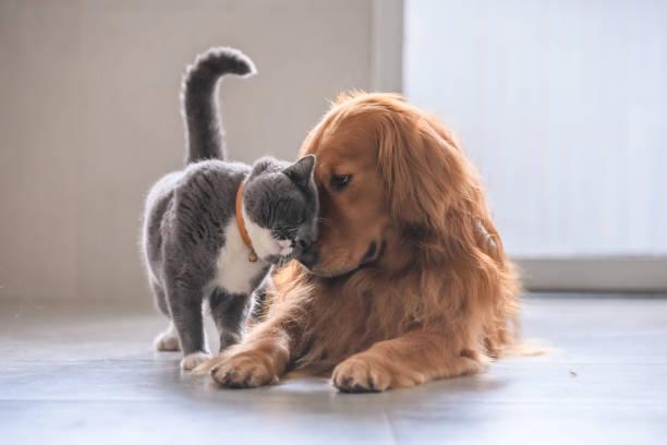 Hond en kat beschermen tegen vlooien en teken